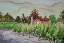 Carmel Vineyard